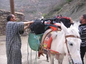 Mules in Imlil