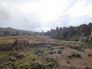 bale-mountains-5