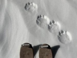 wolverine-tracks