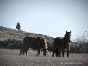 horses-spain