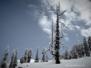 patalsu-forest